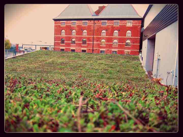 Green roof with border.jpg