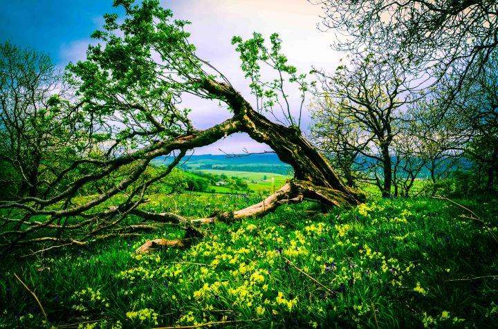 Tree - Yorkshire (1 of 1)