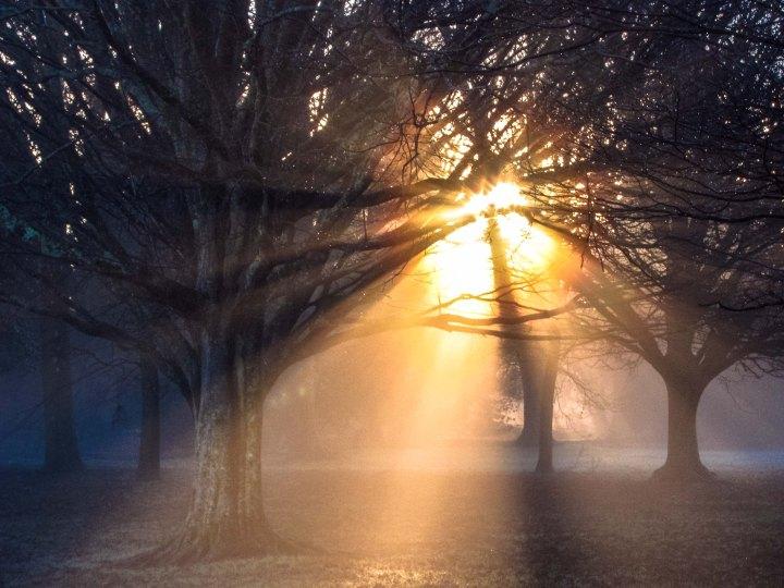 Sun through trees-0385