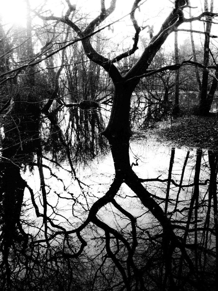Wetlands 2-0261