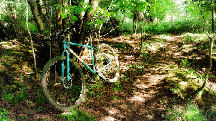 Bike in woods (1 of 1)