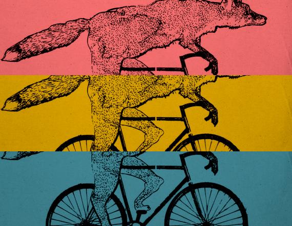 fox-on-a-bike-2